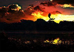 Kort verhaal - Ridder Daan en de draak