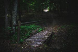 duistere bos - bijzonder cadeau - kort verhaal