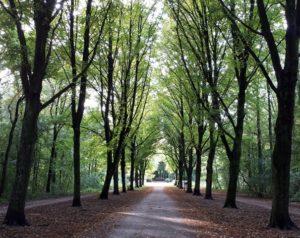 herfst bospad uitdaging